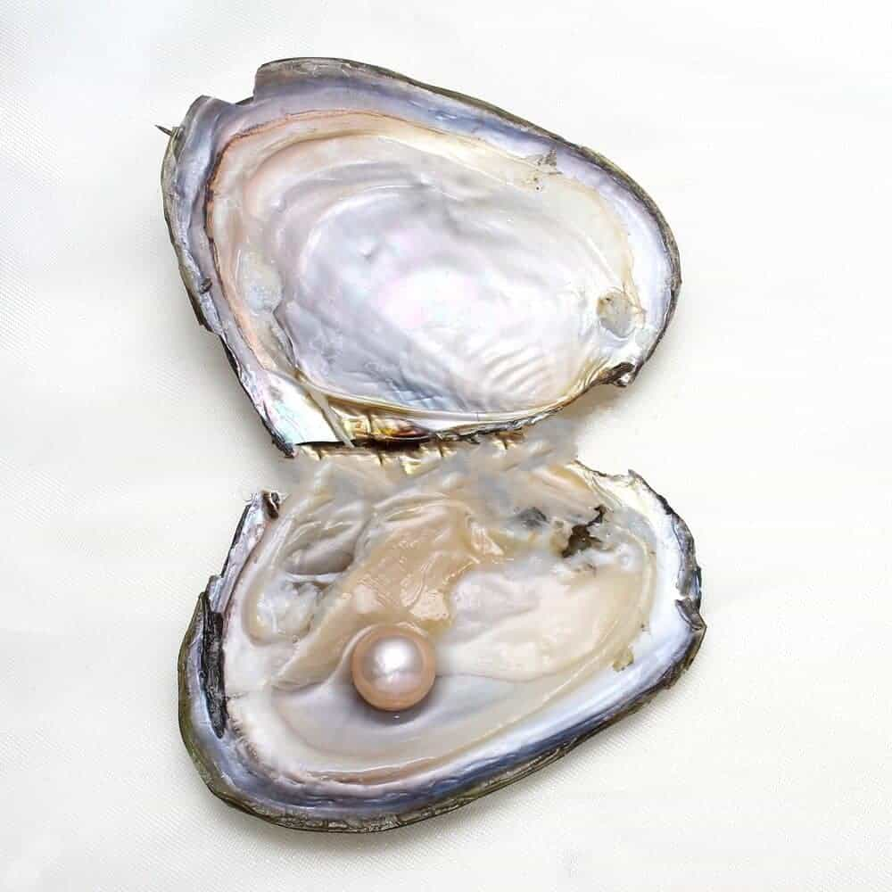 Image result for pearl in oyster